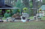 Birds at The Hunting Club