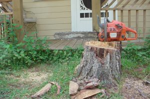 Tree Stump with Chain Saw
