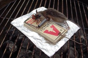 Mouse neatly executed by a classic Victor brand mouse trap.